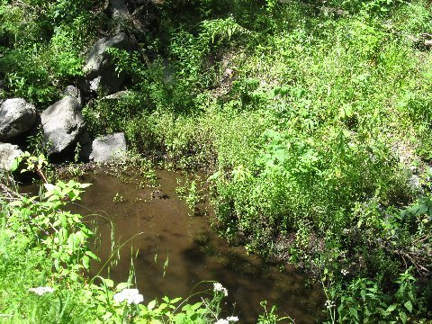 new mexico horse trails water
