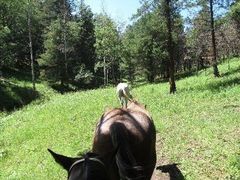 new mexico horseback riding trails