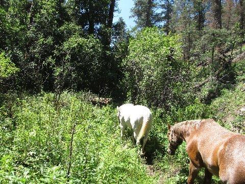 new mexico ruidoso argentina horse trails