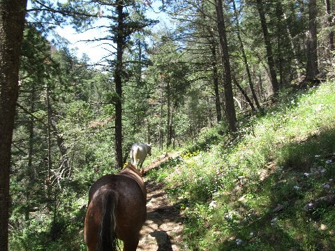 new mexico trail riding argentina loop