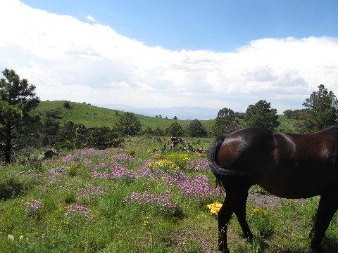 new mexico fields wildflowers