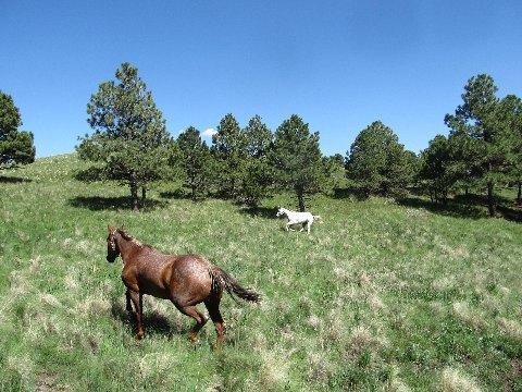 horseback riding argentina trail new mexico