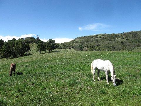 new mexico horseback grazing