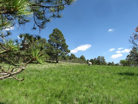 new mexico horseback riding meadows