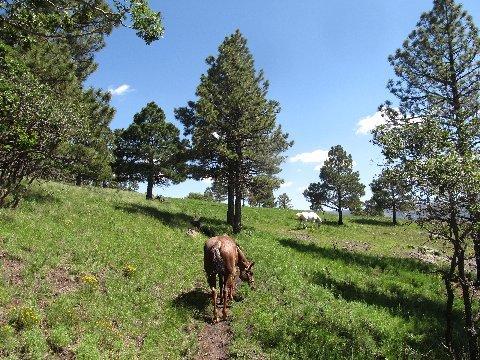 horseback riding mountains new mexico