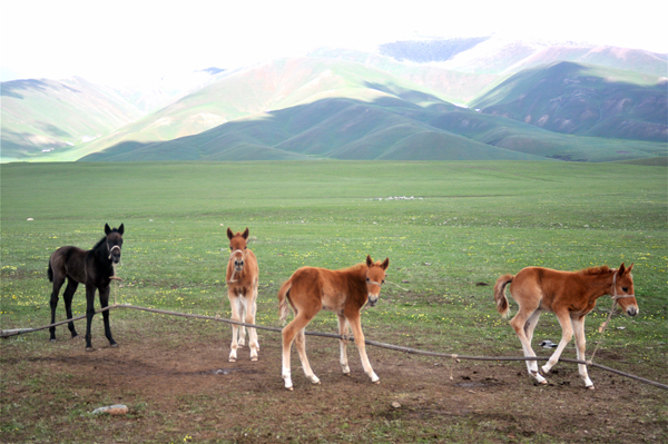 nomad owned foals in western Kyrgyzstan