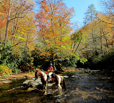 north mills river north carolina horseback riding trails