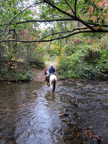 north mills river trails pisgah horseback riding north carolina