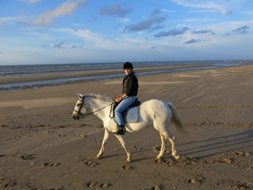 North Sea Beach Horse Ride Belgium