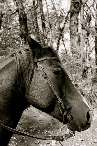 north dakota horse