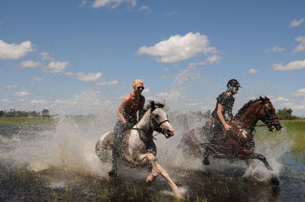 Okavango Delta Galloping Through Delta