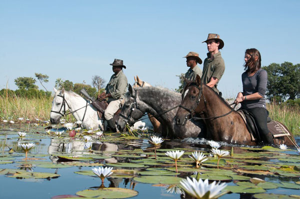 Okavango Delta Swimming With Horses