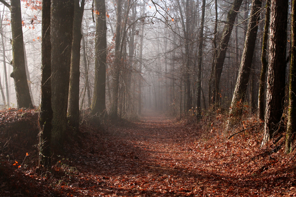 old trace trail on the natchez trace