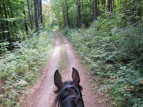 horseback riding on the trail at bear brook