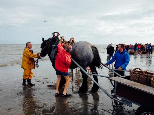 Oostduinkerke North Belgium Giving Horses a Rest