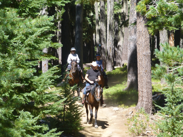 oregon horse trails forest near moore creek