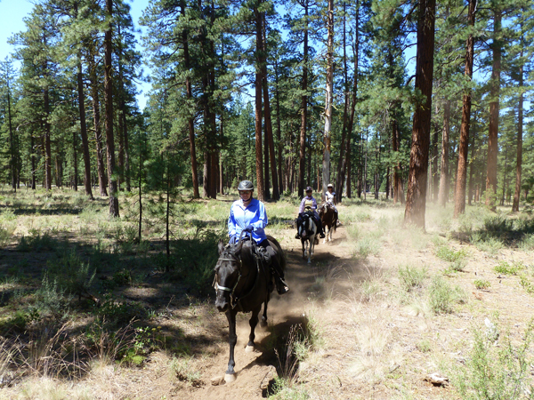 Metolius Basin oregon horse trails