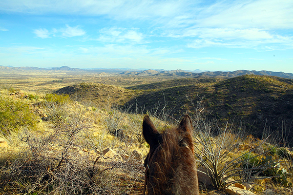 Rancho de la Osa Equitrekking horseback riding Arizona