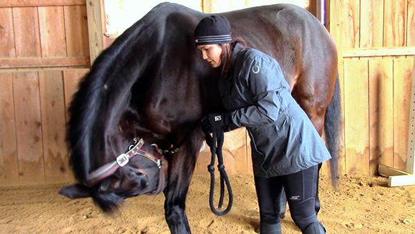 OTTB retraining horse exercises