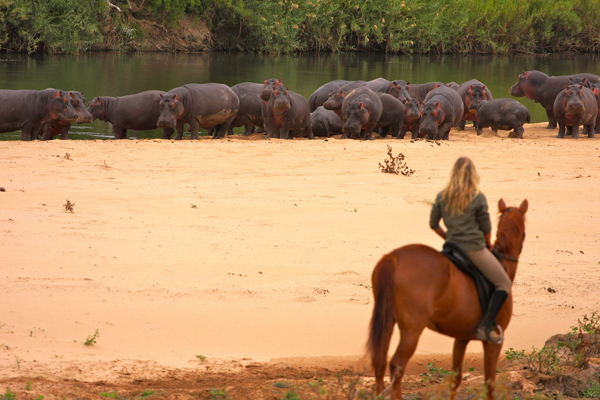 Out in Africa Horse Safari Hippos