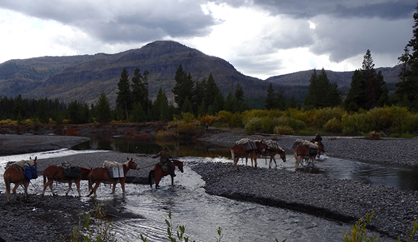 horses and pack mules cross river at yellowstone national park