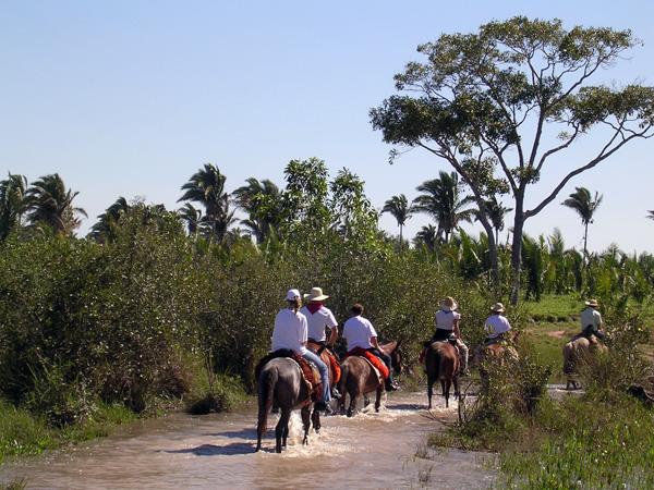 Brazil's Pantanal