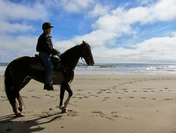 Maine beach horseback