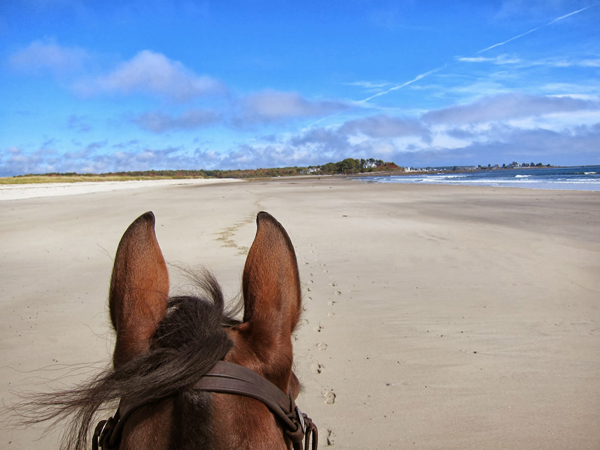 Parsons Beach Maine Horseback Riding