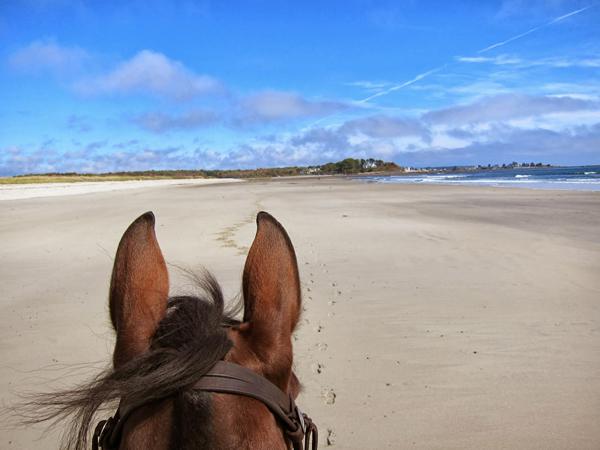 parsons beach maine horseback riding