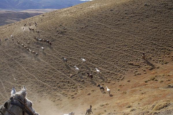 Patagonia horse moving riding vacation