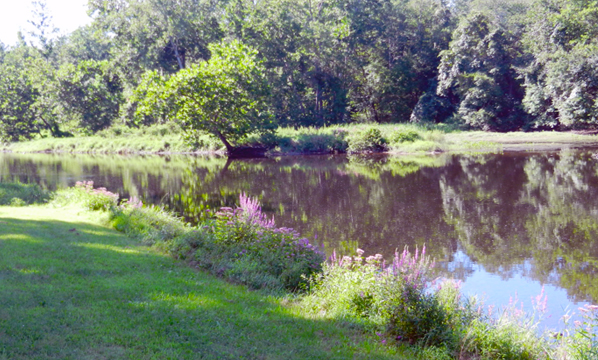 Summer by the Shetucket River Sprague Land Preserve