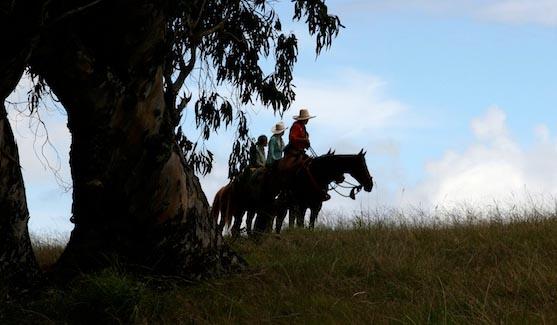 Piiholo Ranch horse ride