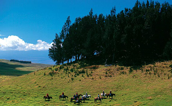 ponoholo ranch big island horseback