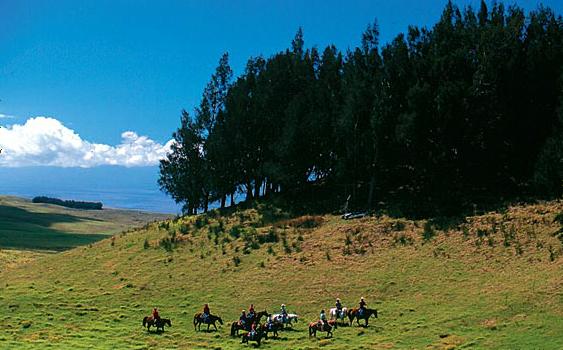 ponoholo ranch big island horseback