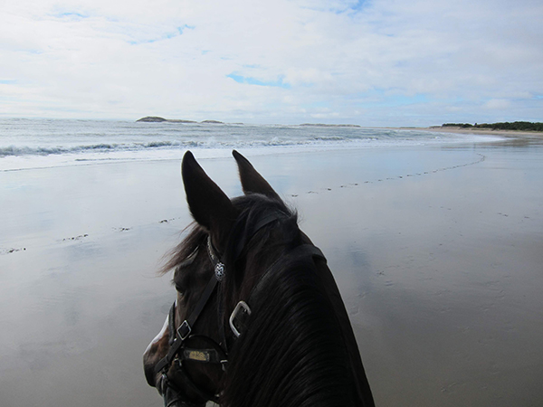 horseback riding at popham beach in maine
