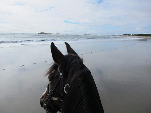 horseback riding at popham beach in maine