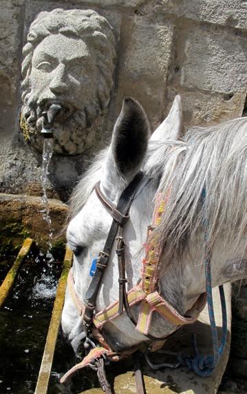Provence horse riding