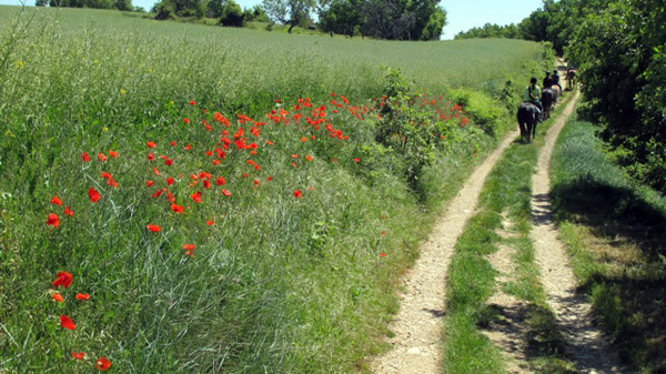 Provence horse riding trails