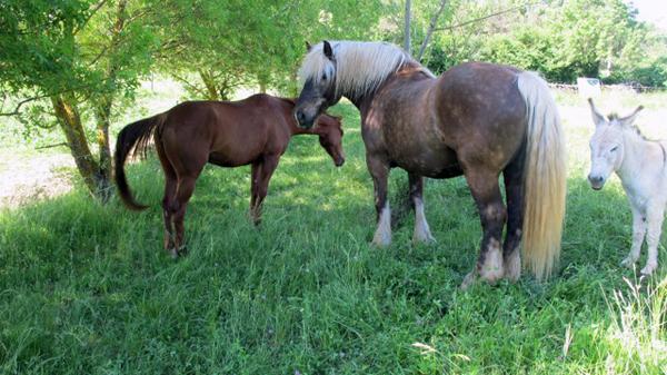 Provence horses