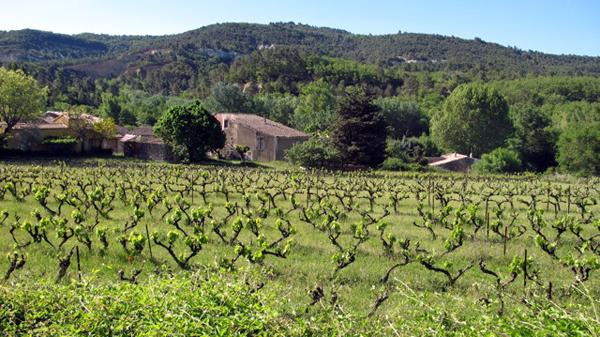 Provence horse riding vineyards
