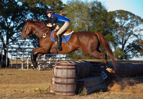 racehorse retraining