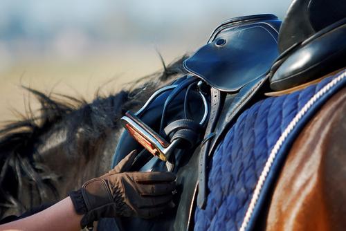 racehorse retraining