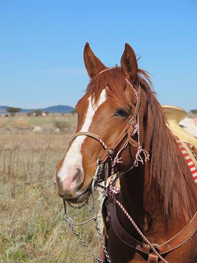 ranch horses mexico travel