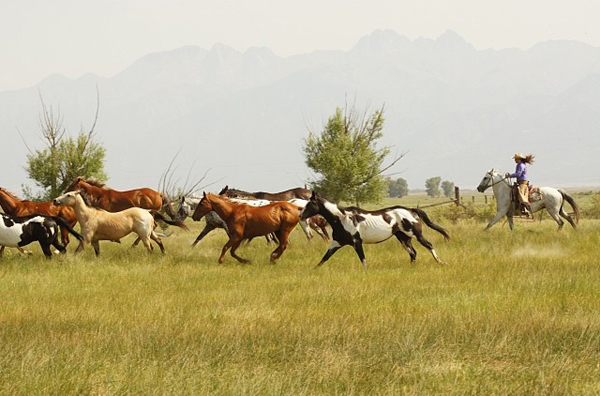 Ranchlands Instagram Horses Galloping