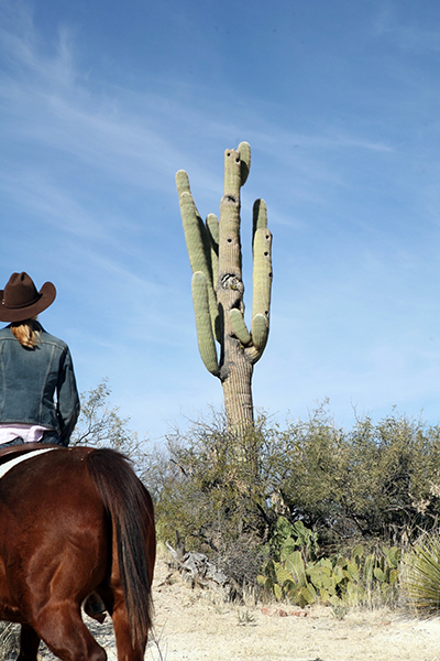 dude ranch cactus horseback sonoroan Darley Newman Rancho de la Osa Equitrekking Arizona