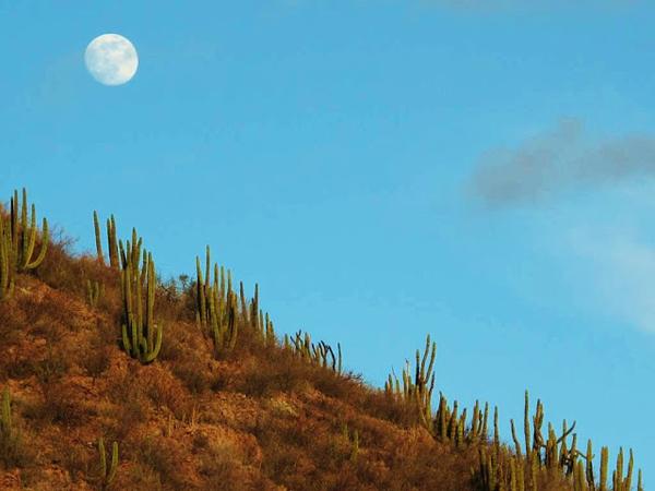 rancho los banos mexico ranch vacations
