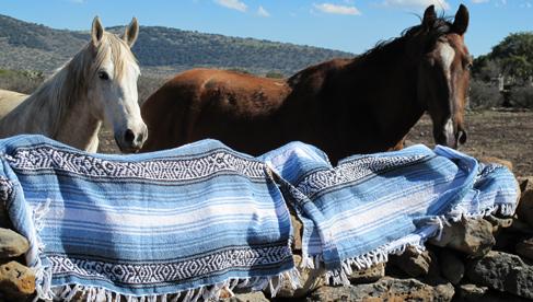 The horses of Rancho Las Cascadas