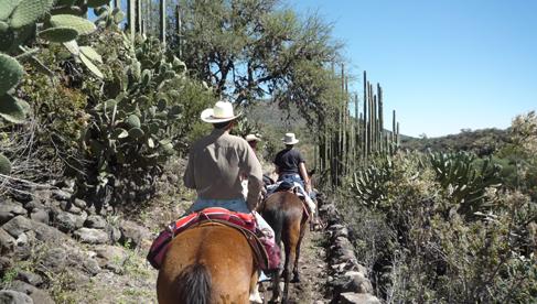 Riding among cacti at Rancho Las Cascadas