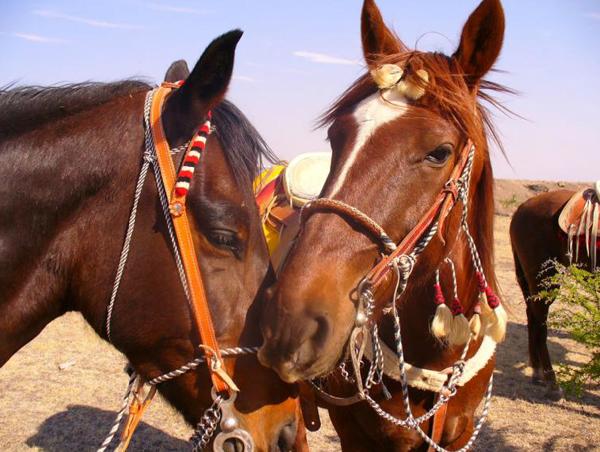 mexico horses rancho las cascadas