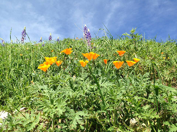 rankin ranch spring flowers